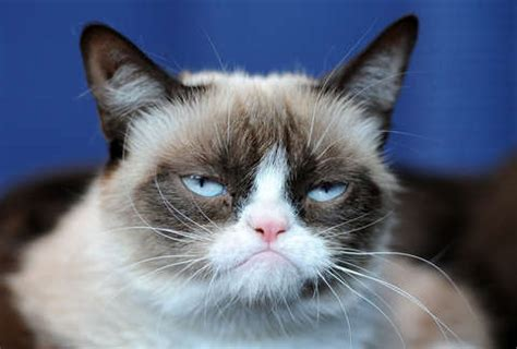 Best Grumpy Cat Memes of All Time: Remembering the Cat