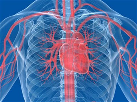 Education Linked to Heart Disease and Cardiovascular Health